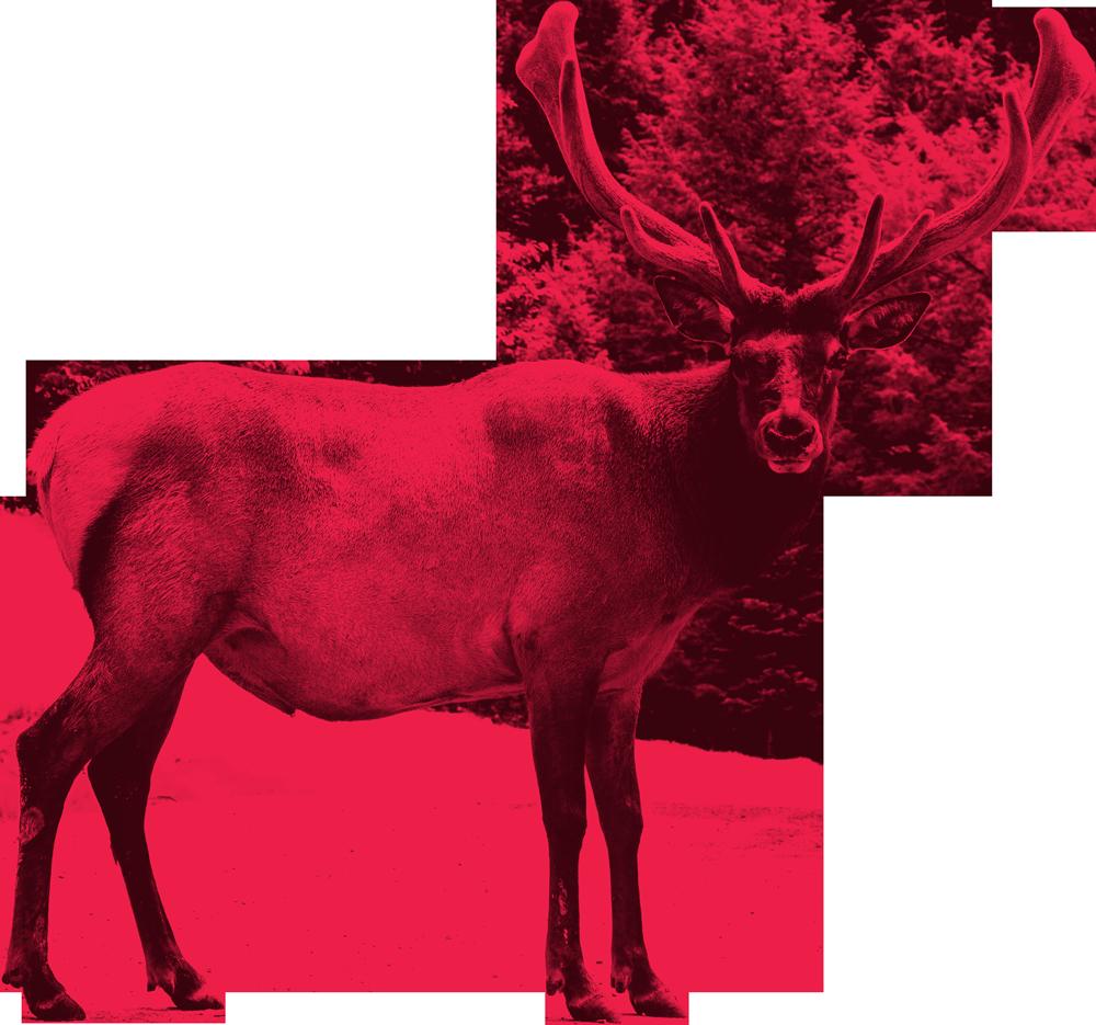 Reindeer-cutout